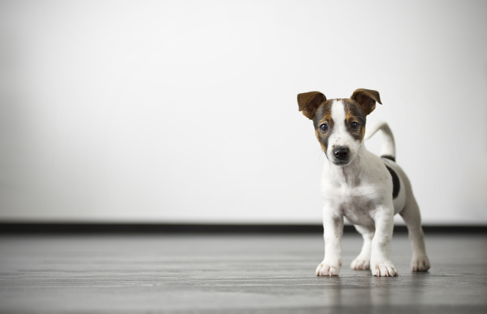 How To Protect Your New Floors From Your Pets